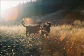 Bilbo and Molly playing in the fading sun: by befree, Views[302]