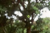 A flower hanging by a thread: by befree, Views[221]