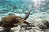 Snorkeling: by befree, Views[187]