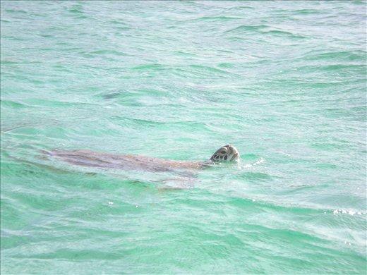 Tobago Cay Marine Park