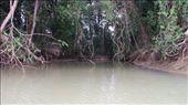 exploring the mangroves: by belleslady, Views[356]