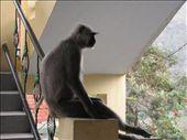 Monkey sitting around our stairwell: by ben_ju, Views[170]