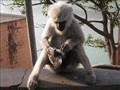 Hungry critter: by ben_ju, Views[292]