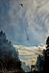 A Bell 212 flies past an old burn pile with an infested tree, en-route to the next pile. Helicopters are frequently used for these control operations due to the remote locations of the infestations. The pine beetle's effect on the environment has been suggested to potentially lead to increased soil erosion, higher water tables, increased wildfire risk due to dry, dead trees, as well as a significant reduction in the forests ability to store carbon.: by benjamin_louwerse, Views[409]