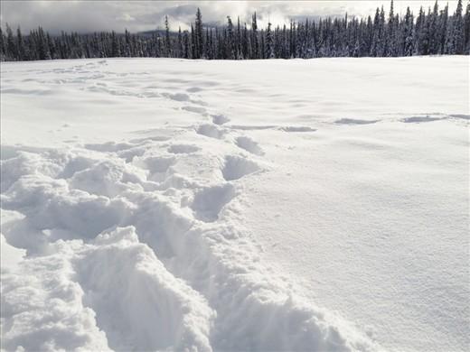 Footprints in a field of fresh...
