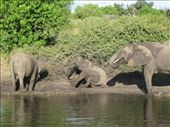trying to create their own mud baths on the banks of the river: by bernadette_tony-travelling, Views[172]