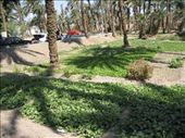 THE VEGETABLE GARDENS WHICH WERE PLANTED BETWEEN THE BEACH AN THE ROAD AT AQABA: by bernadette_tony-travelling, Views[146]
