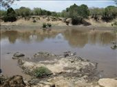 The point at which the wildebeast cross into Kenya from Tanzania during their annual migration.: by beth_king, Views[204]