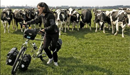 Ivana fleeing for the mad cows!