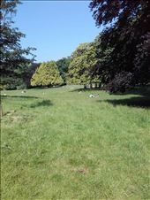 Paris -- Parc Monceau -- picnicing, sunbathing in meadow: by billh, Views[93]
