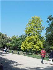 Paris -- Parc Monceau -- leafy tree and school kids: by billh, Views[67]