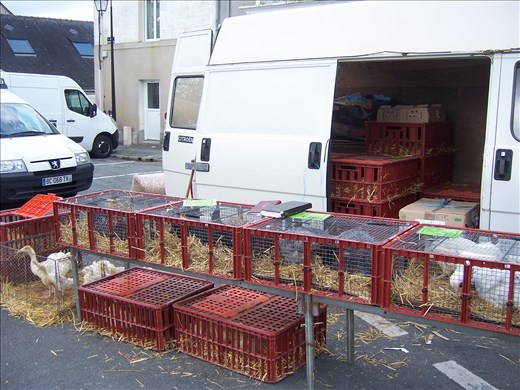 Coutures -- Brissac farmers' market -- chickens/ducks