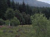 Northwest rural Scotland -- mountains.01: by billh, Views[156]