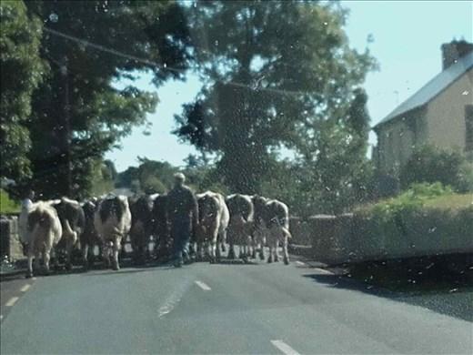 Northwest Ireland coast -- traffic congestion