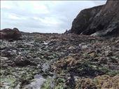 Southern Ireland Coast -- Bunmahon.05: by billh, Views[181]