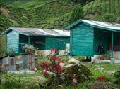 Maisons locales des employes de la plantation: by bixente, Views[137]