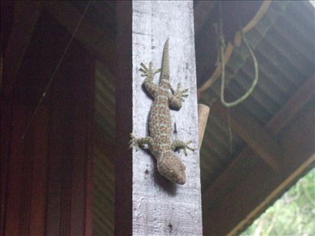 One of our many chalet visitors who came out to play when it rained in the Perhentian Islands