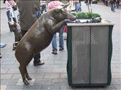 Random pig in Adelaide!: by bixxie, Views[241]