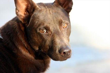 My dog <3