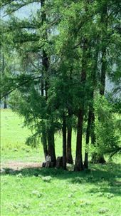 Chen Under Trees: by bodiekern, Views[220]