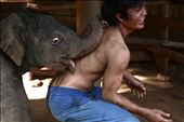 The bond between Mahout & Elephants starts from a very young age.: by boj, Views[127]