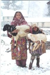 Deepa & Shila goat herding: by bonnie, Views[1170]