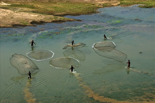 Local tribal engage in collective fishing by their indegeniously prepared nets.