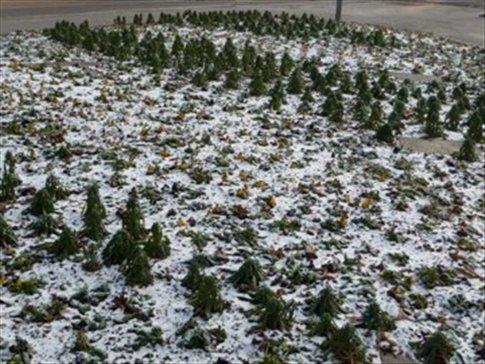 Even the little plants have frozen!
