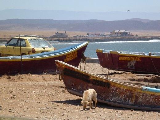 Fishing boats and scavenger dog