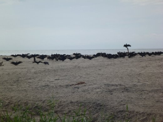 Vultures drying their wings after the rains.