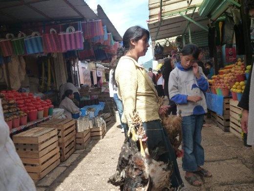 Chicken sequence 2. Yep, their alive.