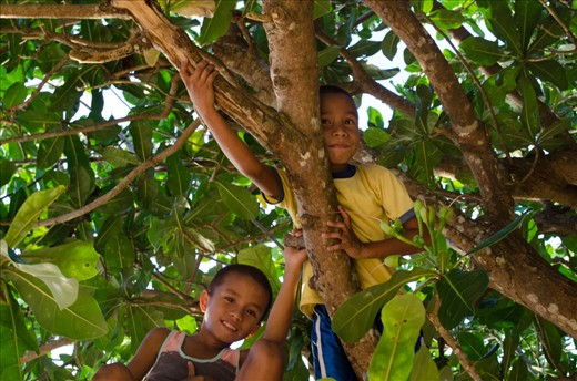 After school hours, kids usually swim in the sea.  This time I saw children playing in a tree along the beach.