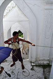 A shepherd is grazing his cows in Mya Thein Dan Pagoda in Myanmar(Burma). His son is holding an umbrella against the burning sun.: by bulelucu, Views[304]
