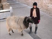 Pilgrims have come in and felt sorry for this sheep and paid the monastery not to kill it - apparently.: by bundynbeaches, Views[176]