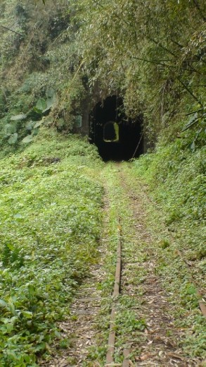 One of many, many, many tunnels on the Ali Shan tourist rail line