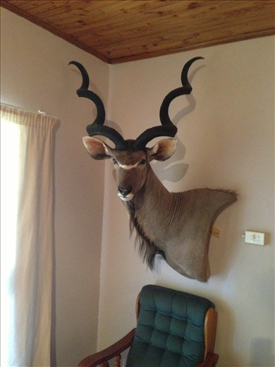 A mounted kudu in the hunting lodge