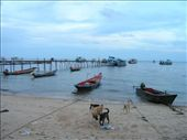 Mae Haad beach Ko Tao, the entry/exit point on the island. Sairee beach was less congested and cleaner, more touristy too: by bundynbeaches, Views[702]