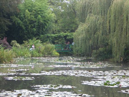 the water lily ponds