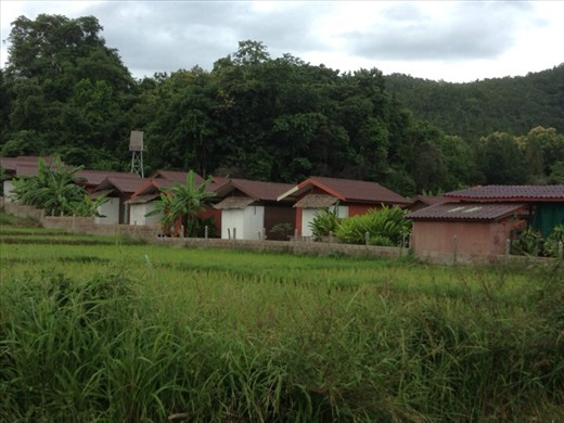 Bungalows on rice field
