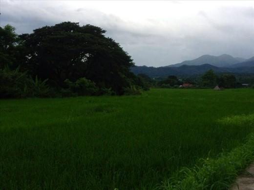 Mountains & rice paddy next door