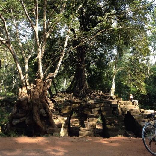 Tree & bridge intertwined