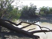 Campsite darling river: by callwill, Views[488]