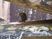 Ubirr - female rock wallaby: by callwill, Views[337]