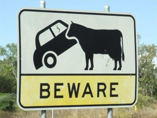 Cow eating cars warning sign