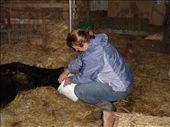 Calf feeding.: by candjmcshane, Views[522]