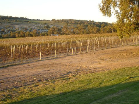 The Vineyard at sunset, beautiful because we've stopped work for the day. Aaahhh, bliss...