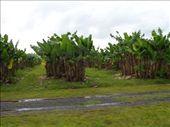 Bananas.: by candjmcshane, Views[295]