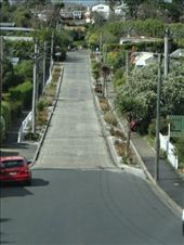 Baldwin St...steepest street in the world. : by capecodkiwi, Views[133]