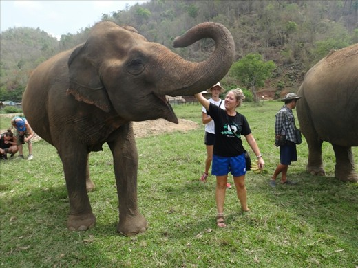 Mae Perm-first elephant on the reserve. Is best friends and protecive of jokia. Always stays by jokia's side
