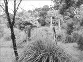 by carbarandmar, Views[93]